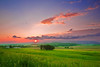 Pennsylvania, Morrison Cove, Spring morning Sunrise Landscape,  , 