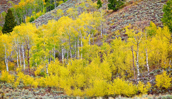 Montana, West Yellowstone, Metcalf Wildness, Fall Colors, 蒙大纳,秋色