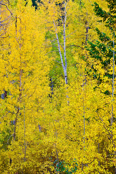 Idaho, Mesa Falls Scenic Byway, Fall Colors, 爱达荷, 秋色