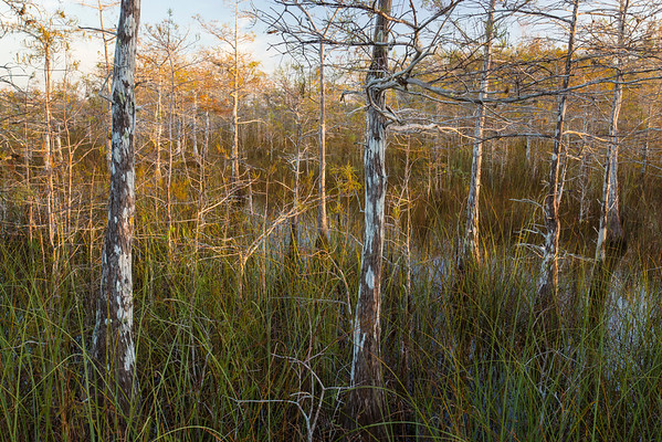 Florida, Everglades National Park,  Pa Hay Okee, Sunrise