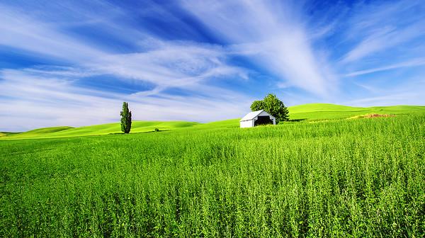 Washington State, Palouse Region, Barn, 华盛顿州,  田园